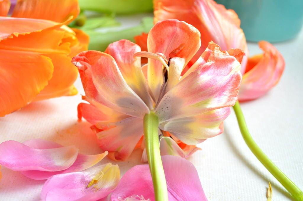 byClaire-haakkatoen-bloemenhaken  (1)