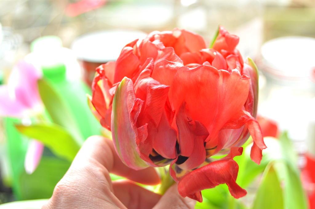 byClaire-haakkatoen-bloemenhaken  (3)